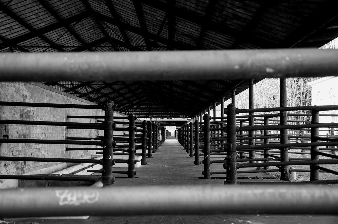 black and white slaughterhouse